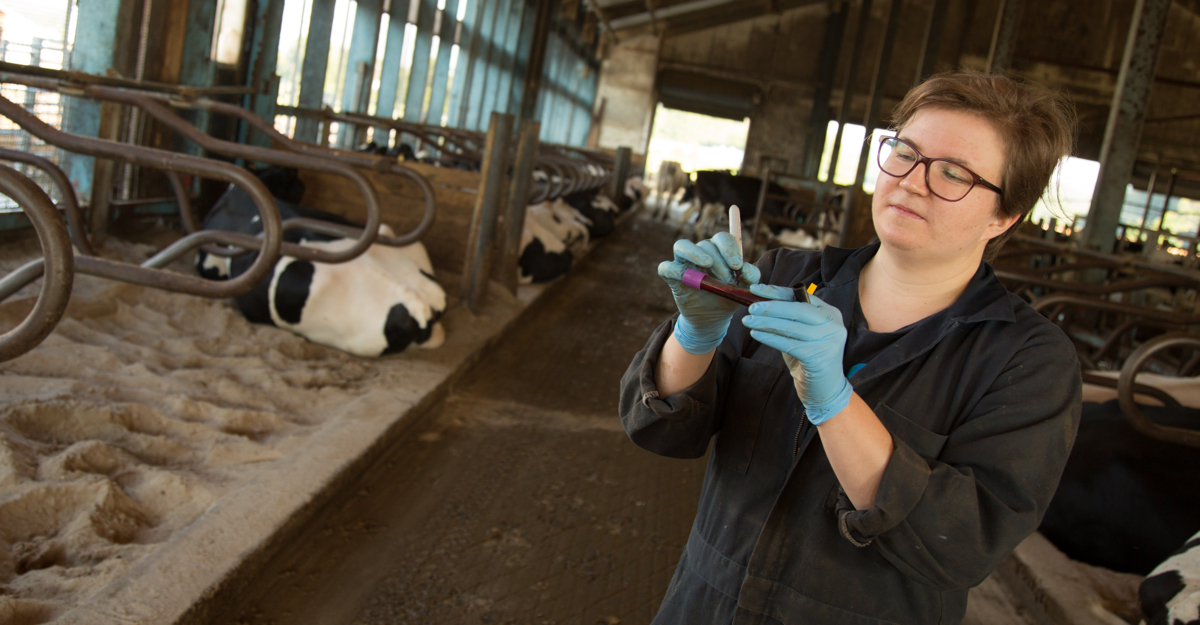 Animal Science Ph.D. student Susanna Raeisaenen labels a blood sample obtained from a dairy cow during a nutrition experiment.