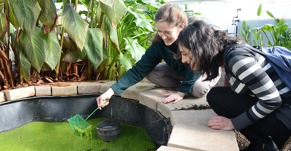 Two female engineers working in a greenhouse on plant-based water purification systems