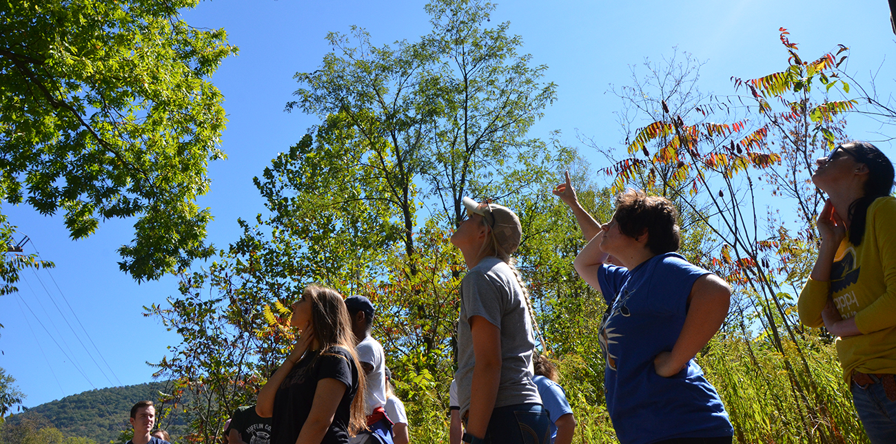 Students standing in woods and point to trees