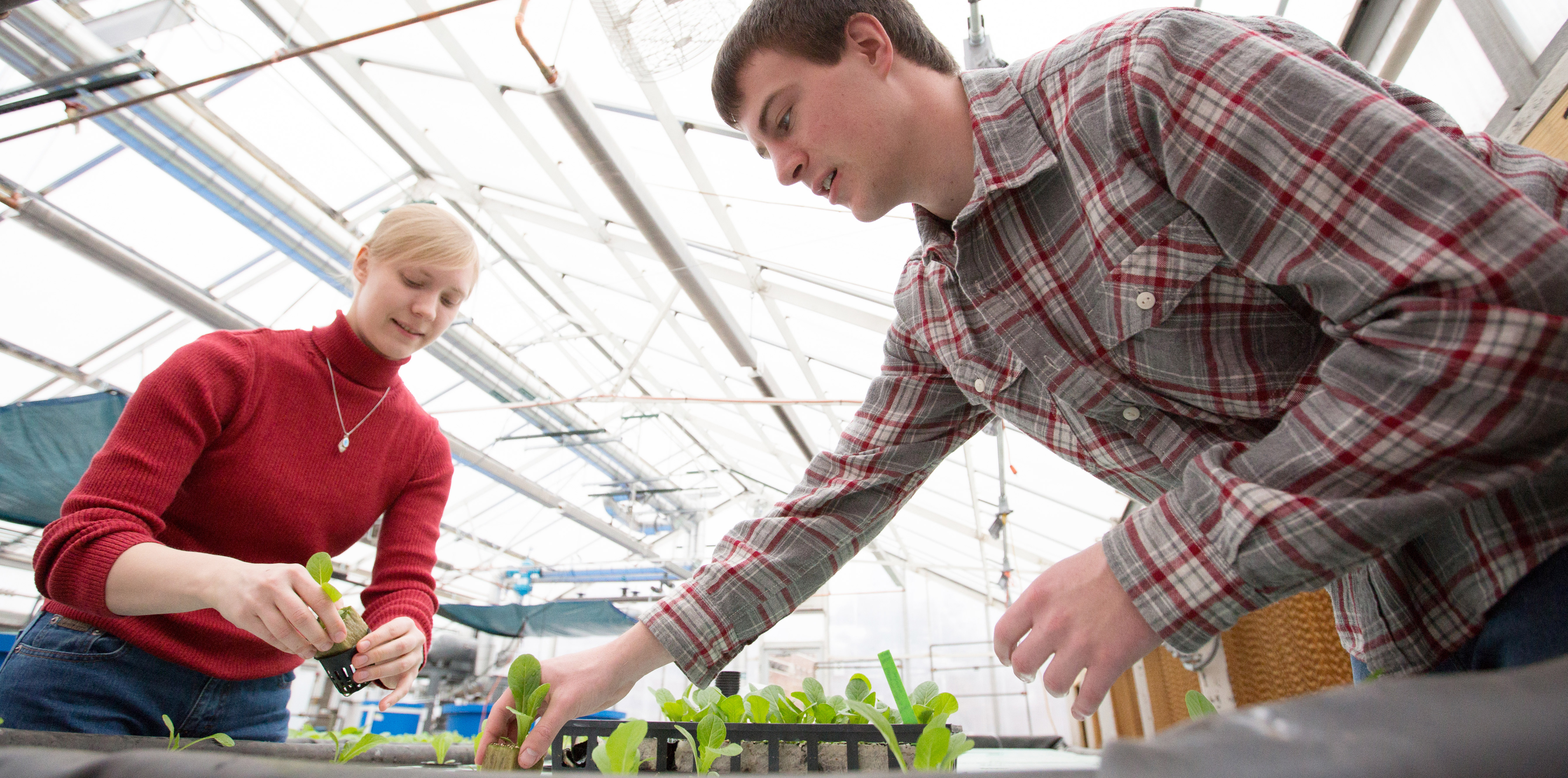 Two students in a greenhouse planting a hydroponic bed