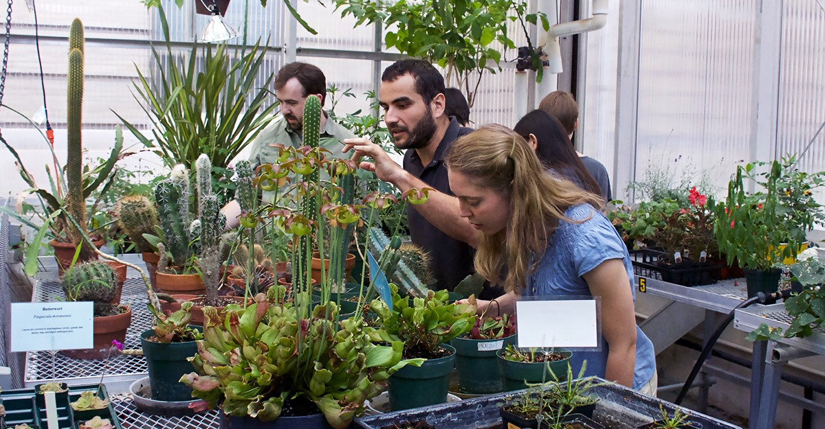 Plant Biology students examining experimental plants in the greenhouse